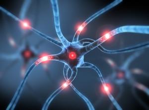 Neuronas-300x221
